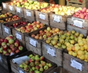 There are 29 different varieties of apples for sale Farrington's Farm Shop at www.farrington's.co.uk