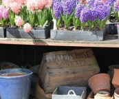 The kitchen gardener's dream: lots of colour for flower arrangements and old, vintage containers at Sonia Wright's plant nursery.
