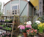 This is Wendy Lewis's shepherd's hut, where she runs her floristry business.