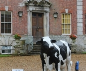 Milly, the Blackmore Vale Dairy cow at Feast of Dorset, Deans Court, Wimborne Minster, Dorset.