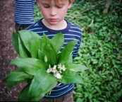 Picking wild garlic. All photography Copyright Emma Bradshaw (www.emmabradshawphotography.com)